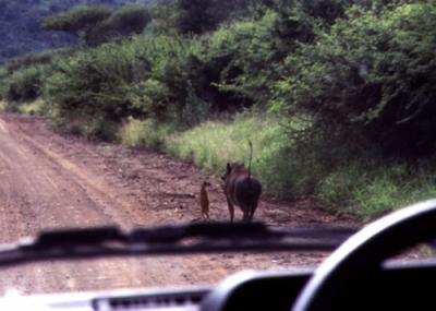 Timón y Pumba ;)